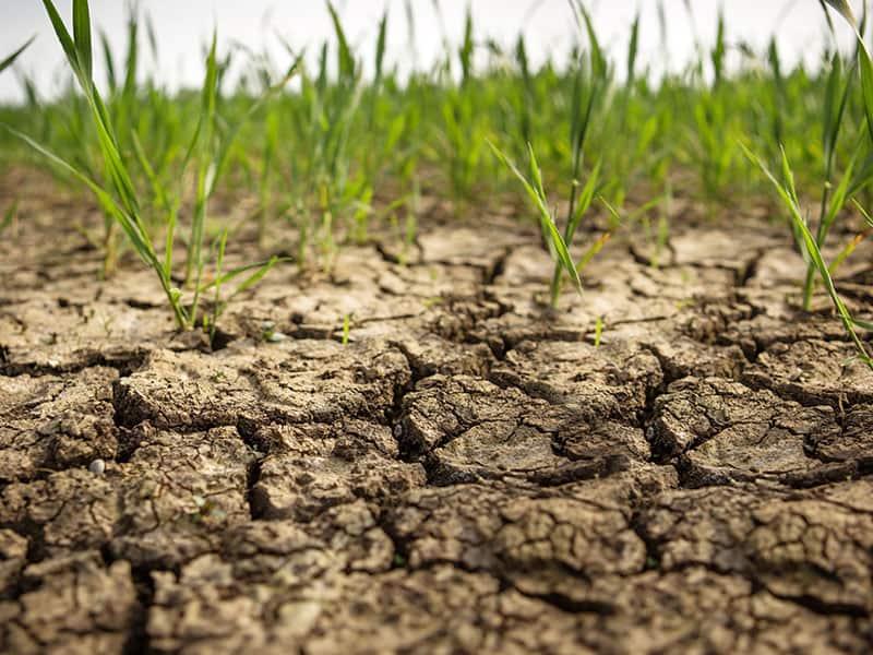 Hydretain - Plantas en suelo seco