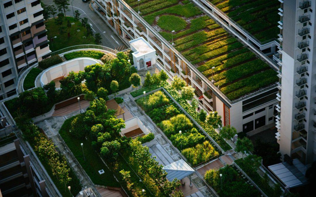 4 beneficios de los techos verdes