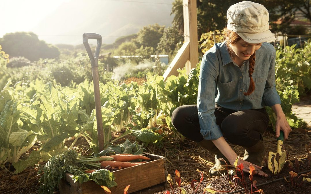 7 consejos para cultivar la huerta perfecta
