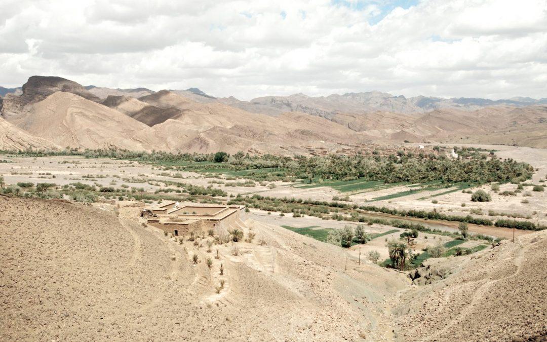 Desierto con vegetación
