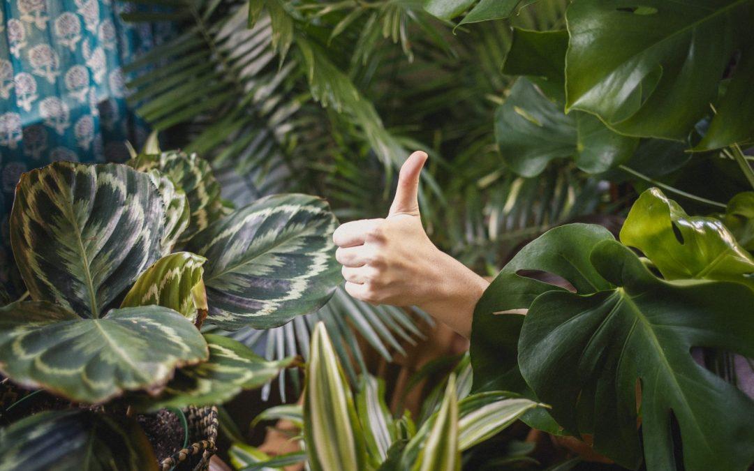 Manos afirmando que todo está bien con las plantas