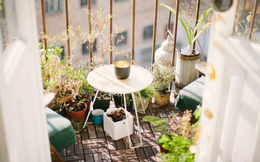 ¡Es temporada de vacaciones! Hora de proteger las plantas del abandono temporal.