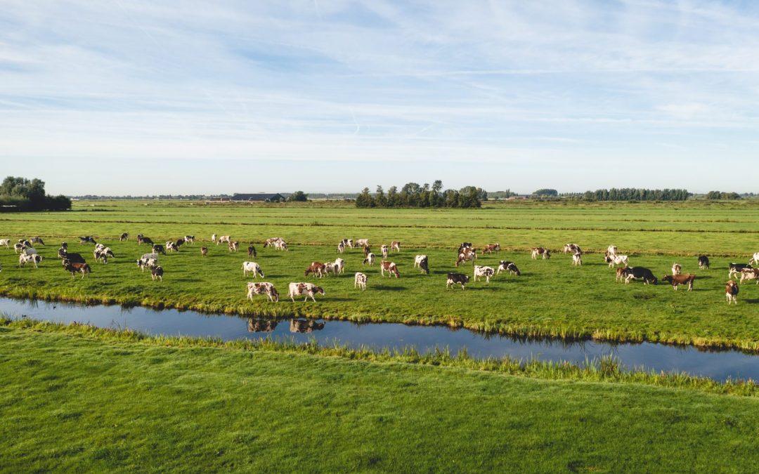 Pasto sano para el ganado