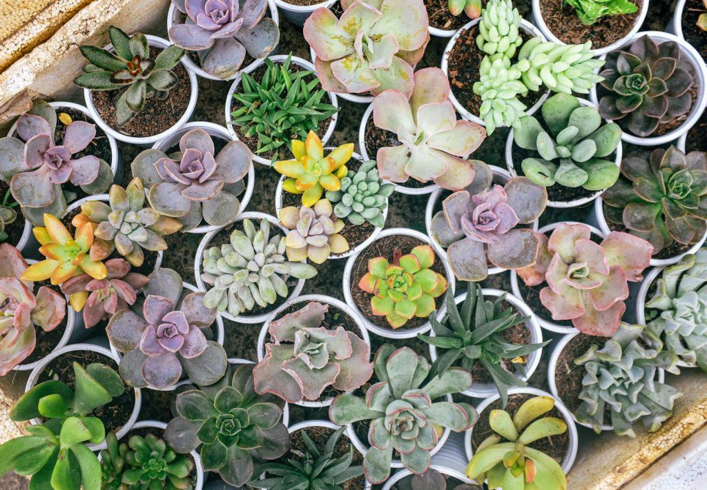 Plantas en maceta tratadas con Hydretain