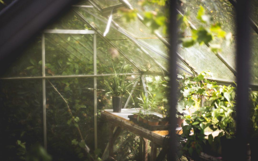 8 consejos para iniciar un invernadero