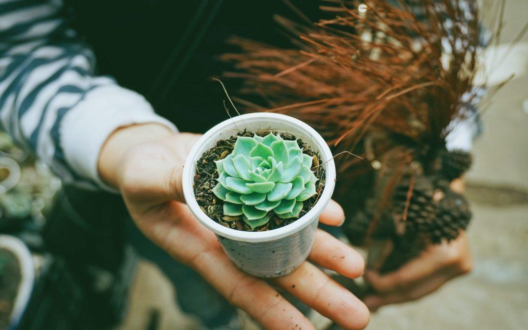 Razones por las que regalar plantas es siempre una gran idea