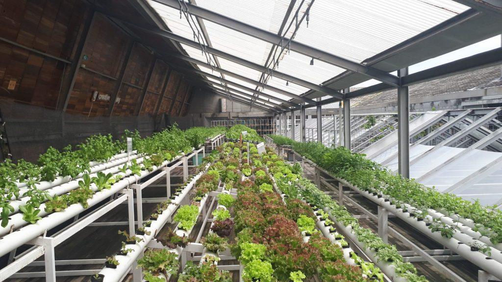 cultivos en invernadero con Hydretain