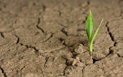 Hydretain disminuye la toxicidad de la sal para las plantas durante una temporada de sequía