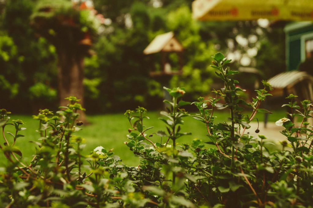 Árboles, arbustos y plantas con Hydretain