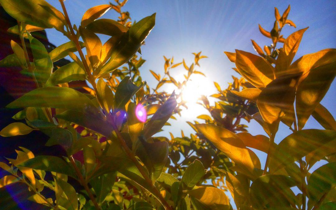 6 consejos para jardines en condiciones de sequía