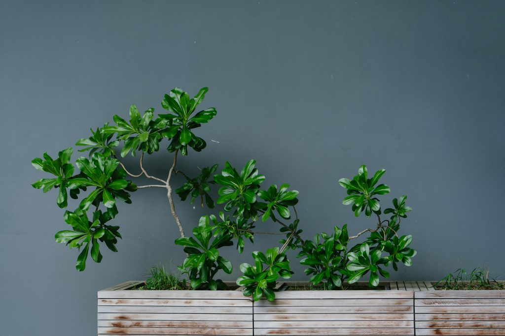 Planta tratada con Hydretain