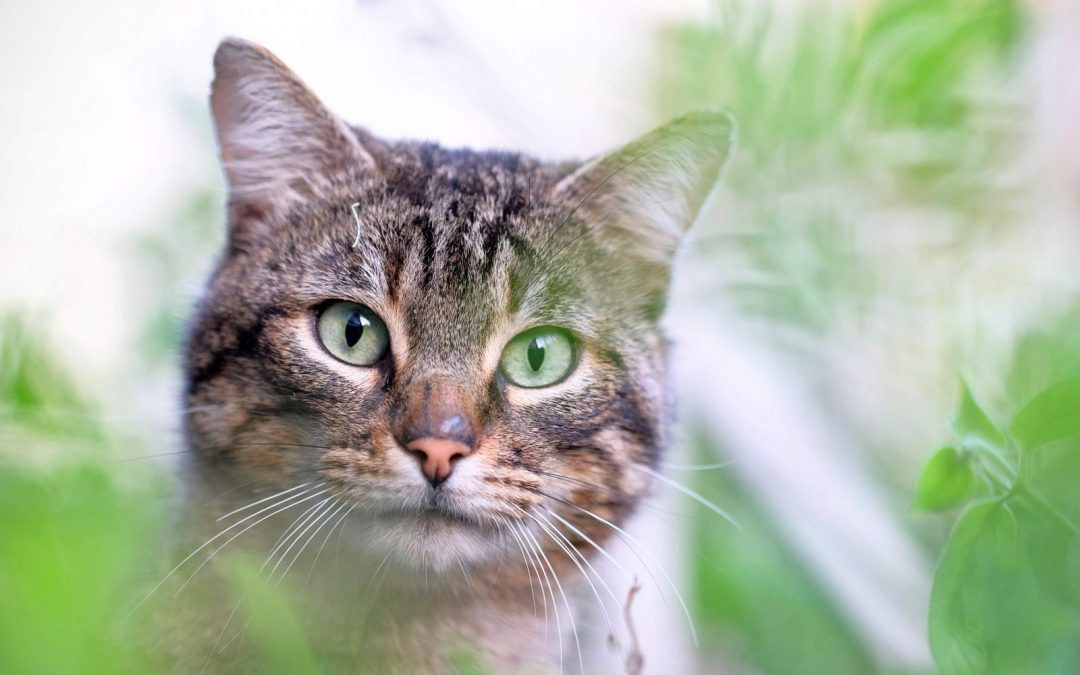 4 plantas preferidas por su gato