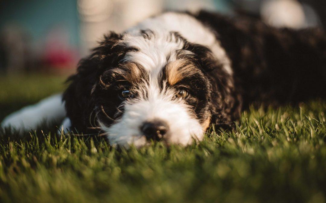 4 Herbicidas para su jardín que no dañan a sus mascotas