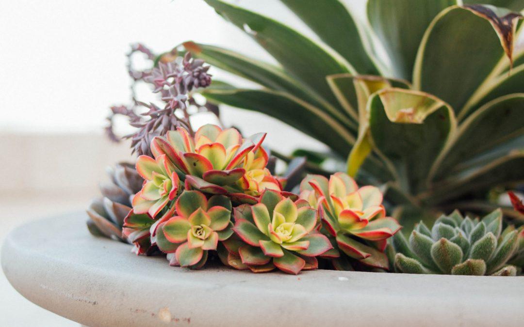 Las plantas de interior. Cómo solucionar algunos de sus problemas más comunes