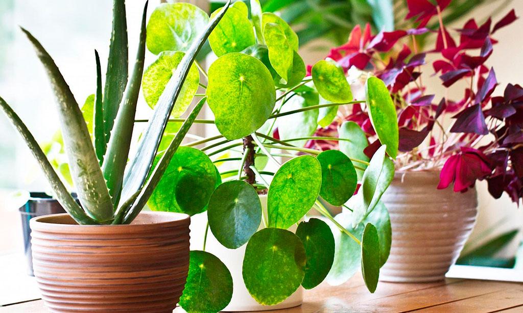 Hydretain – Uso en plantas en maceta